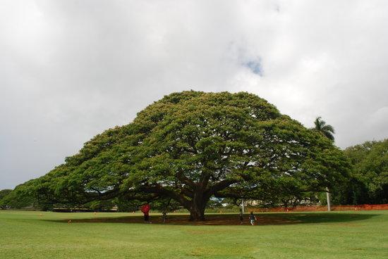 茂纳鲁亚花园