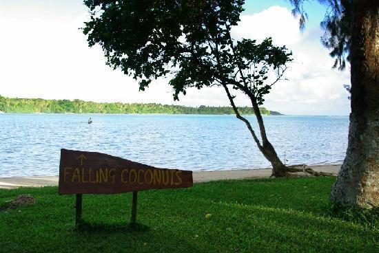 Erakor Island Resort & Spa: The coconuts were great!