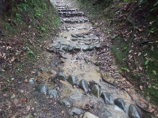 Kumano Kodo: 坂道は滝状態