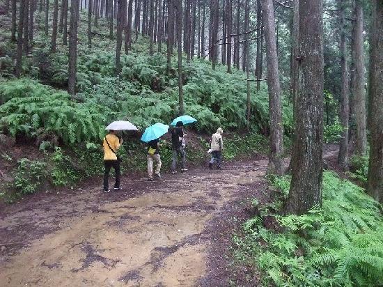 Kumano Kodo: 水たまりを避けて歩きました