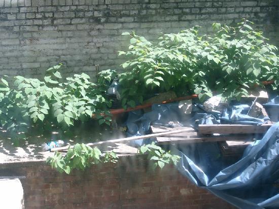 Aquarius Hotel: Der Müll vor dem Fenster im Hof.