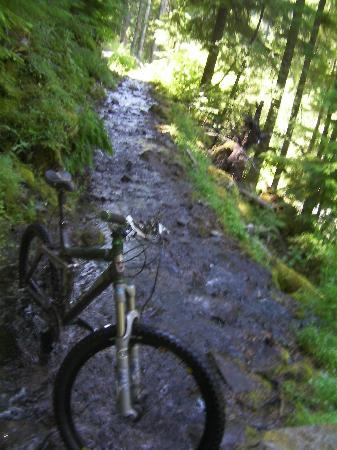 Bend, OR: Fun section of trail