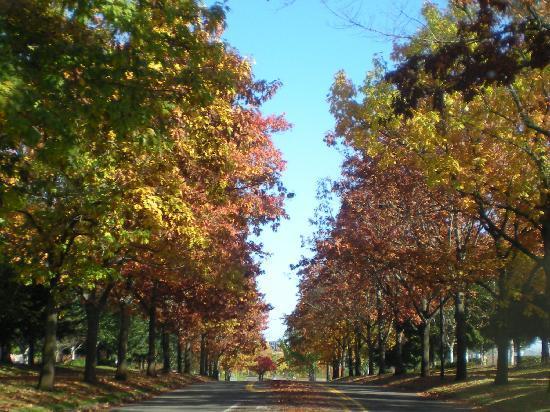 Larkspur Landing Hillsboro: Shute Road & Brookwood Parkway