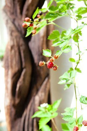 Maison de la Rose: Garden details