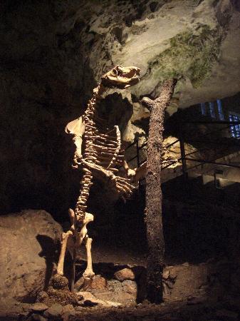Grotta Gigante: Ein Bären-Skelett