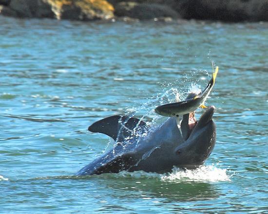 Dolphin Explorer Marco Island
