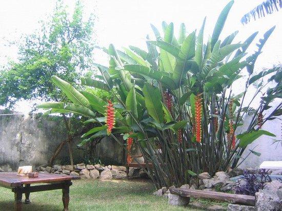Valparaiso Hostel Rio: courtyard/garden at Bellas Artes Guest House