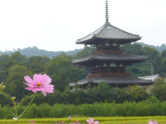 Hokiji Temple : 秋の風景