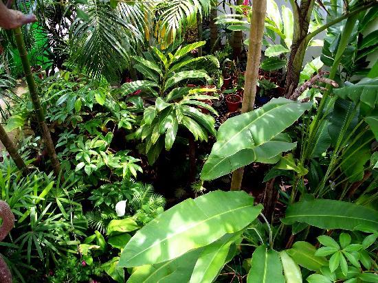 Casa De La Luz: Jungle Garden