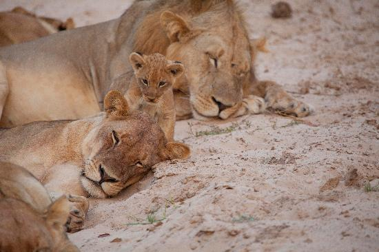 Kafunta River Lodge: Newest Member of the Chichele Pride