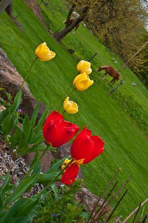 Garden Gate Get-A-Way Bed & Breakfast: Horses grazing next to Garden Gate Get-A-Way Bed & Breakfast
