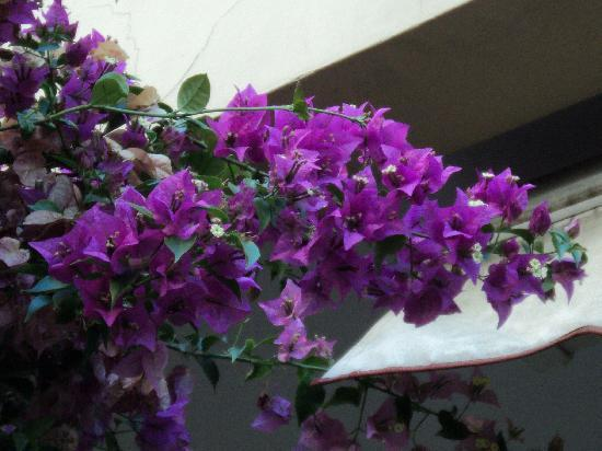 B&B La Bouganville: fiori del giadino B&B