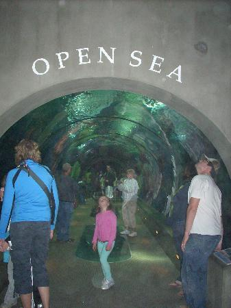Oregon Coast Aquarium: The start of one of the 3 tunnels.