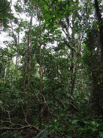 Yasuni National Park, Ecuador: In the jungle