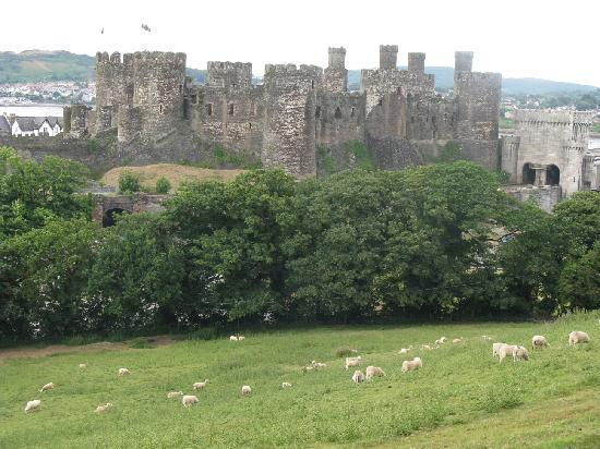 Conwy Castle from the sheep hill
