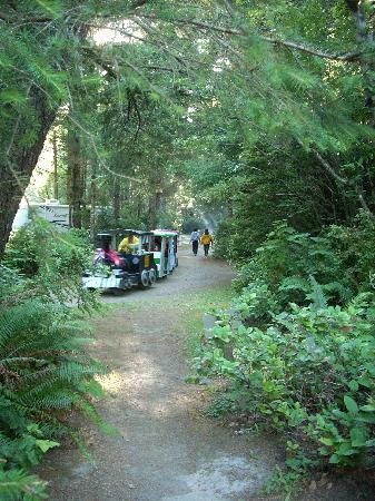 Bandon/Port Orford KOA: The train making its tour of the campground.