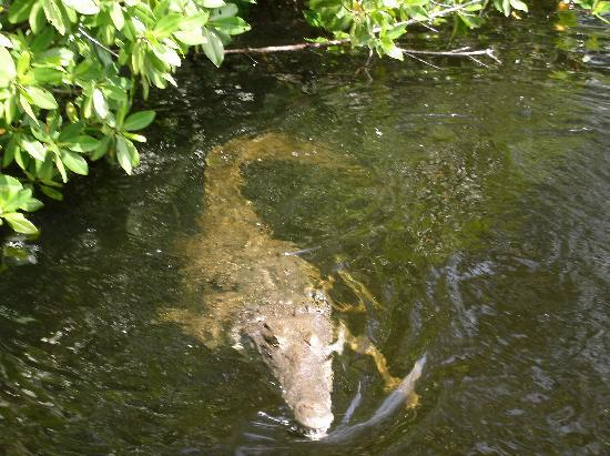 Couples Swept Away: Black River Crocs