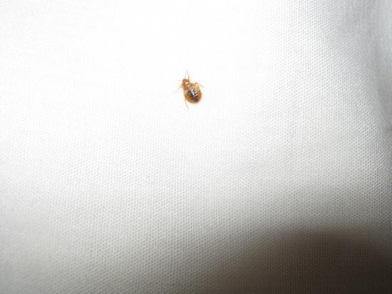 Bedbugs @ Celebration Suites