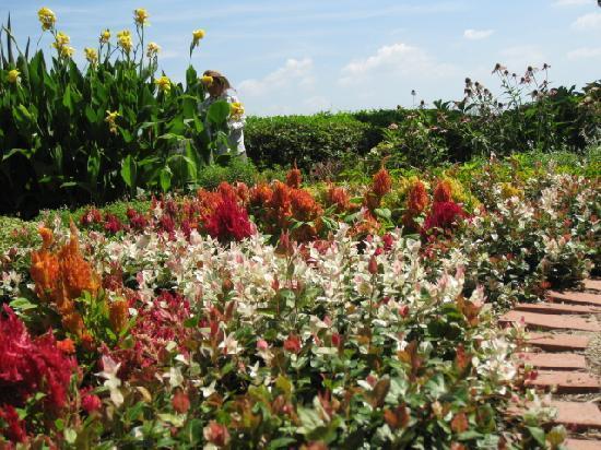 Zugaike Park: お花もきれいで、反対側に木陰もあります