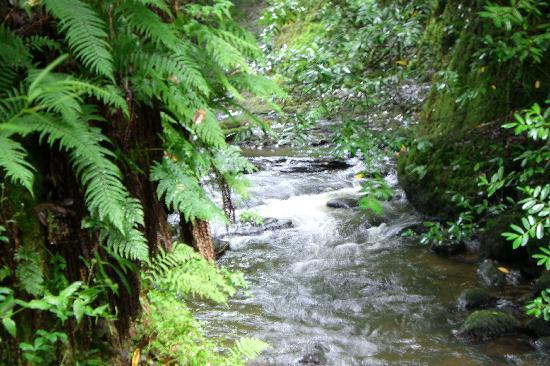 The Glynhir Estate: The gorge.