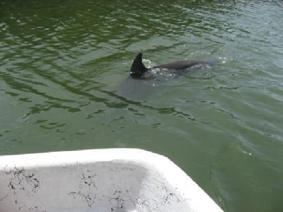 Wilderness Southeast Tours: dolphin visit
