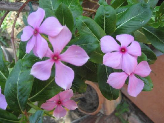 Koh Kwang Resort : In the garden