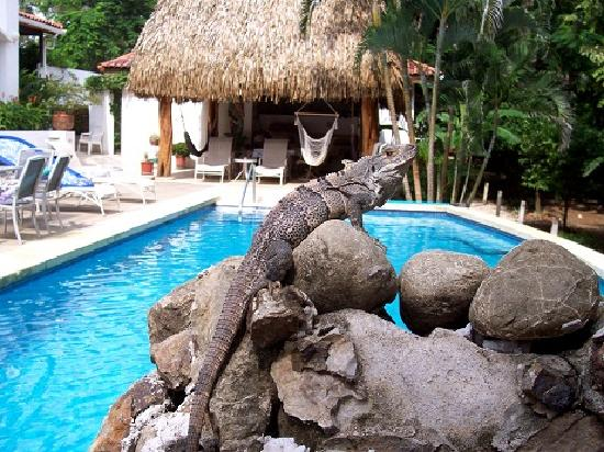 Villa Alegre - Bed and Breakfast on the Beach: Lifeguard