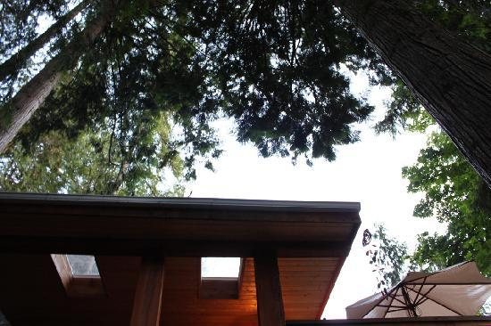 The Tuwanek Hotel: Looking up outside the treehouse cottage
