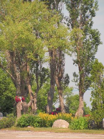 Hotel Cap-aux-Pierres: De beaux arbres