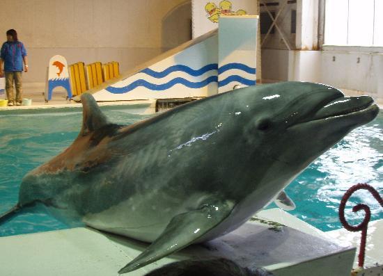 Otaru  Aquarium: イルカ