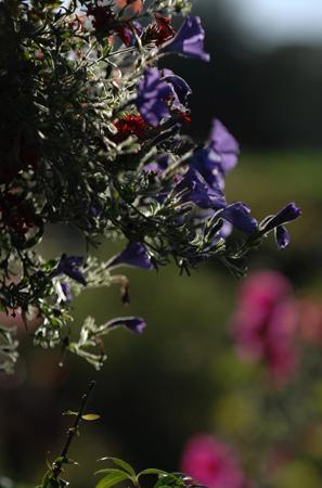L'Angeviniere - Gites et Chambres D'Hotes: Fleurs...