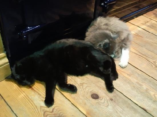 The Old Smithy B&B: Cats curled up next to Ann's Aga!