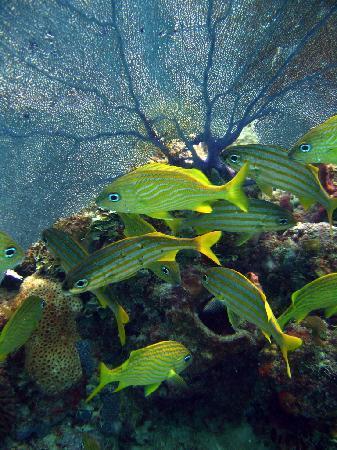 Bayahibe, Dominican Republic: Les recifs du Parc National de l'est Rep Dom
