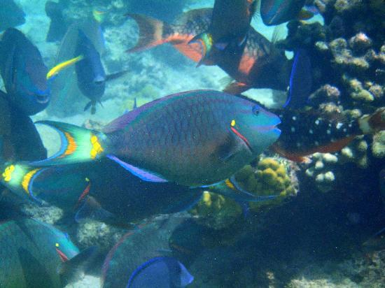 Snorkeling At Coral Gardens Picture Of Providenciales Turks And Caicos Tripadvisor