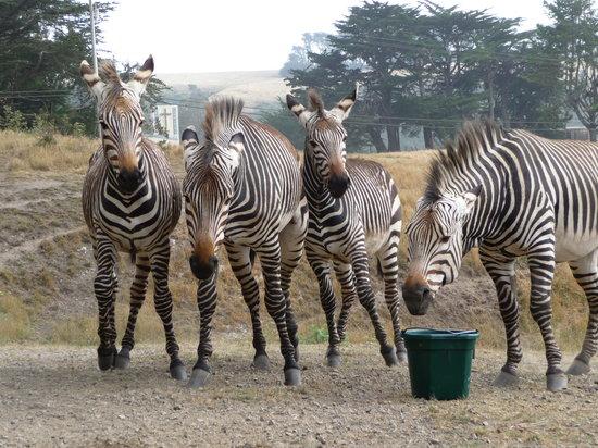 B Bryan Preserve : Mountain Zebra