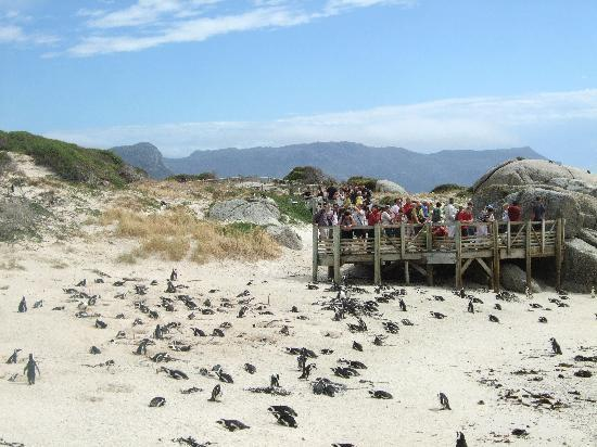 Simon's Town, South Africa: Strand