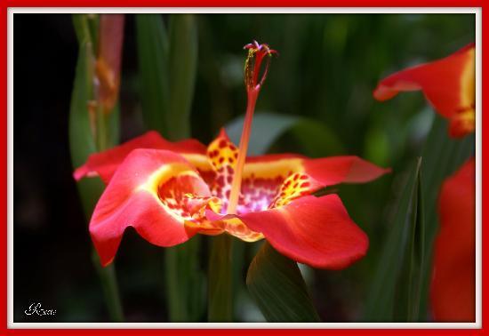 Del jardin de orquideas picture of orquideas moxviquil for Jardines de orquideas