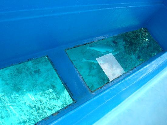 Yurigahama Beach Offshore Cruise Boat: 海をのぞきます