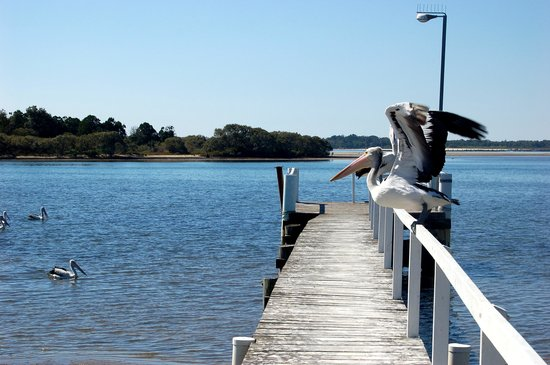 Yamba, Australien: Pelicans on the jetty