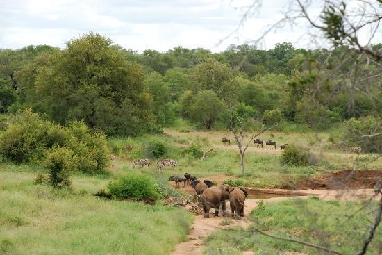 Garonga Safari Camp: Blick vom Haputhaus zum Wasserloch