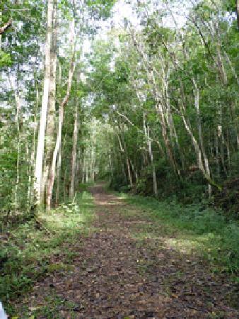 Pousada Tankamana : Private track