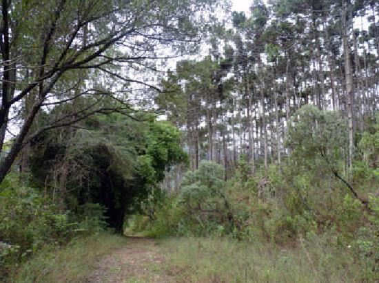 Pousada Tankamana : Private track, pure air