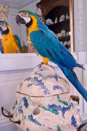 Chateau de la Barre: Kakoo, our Macaw parrot