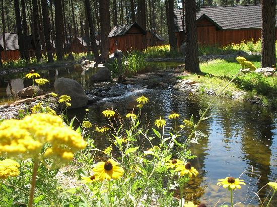Five Pine Lodge & Spa : Lovely flower and creek running through the property.