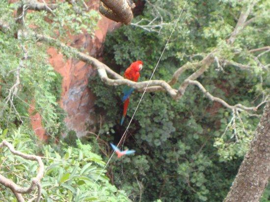 Buraco das Araras Ecoturismo: Beautiful Birds