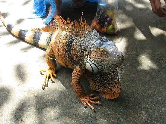 Sukawati, إندونيسيا: Bali Zoo