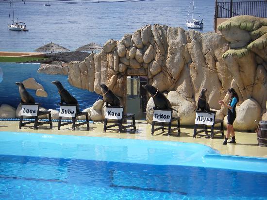 Calvia, Spanje: Seelöwenshow