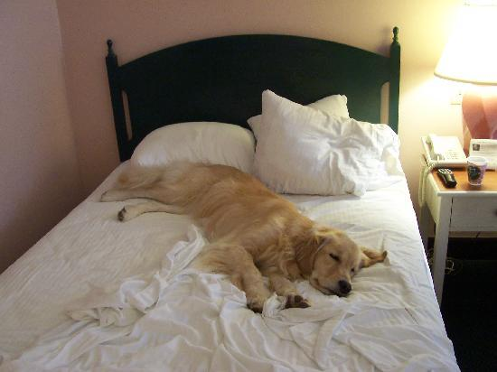 """Best Western Staunton Inn: Closest thing to a """"bedbug"""" you'd *ever* find at this place! :-)"""