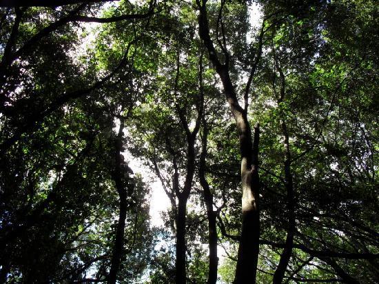 Garafia, Spanien: A Canopy of Trees