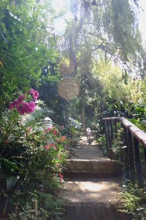 Protea Guest House: Garden path